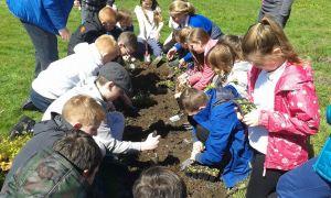 150529 CHP Planting2
